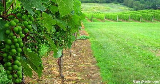 Gaspereau Vineyards, Nova Scotia, Canada