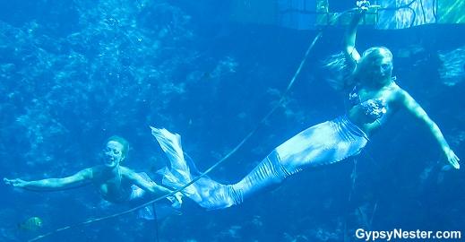 The Mermaids of Weeki Wachee Springs, Florida