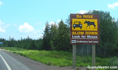 Moose collision sign in Newfoundland