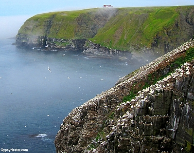 Cape St. Mary's in Newfoundland