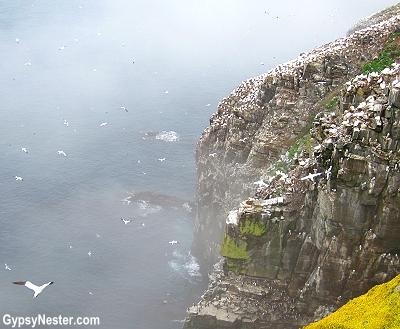 St. Mary's Ecological Reserve, Newfoundland, Canada