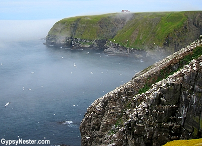 The cliffs at Cape St. Mary's Ecological Reserve in Newfoundland