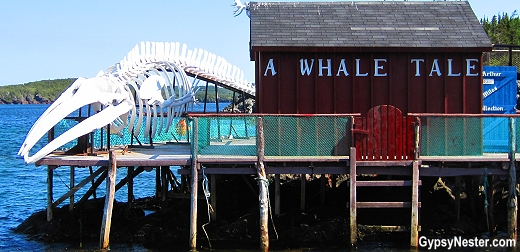 Whale skeleton on the side of the road in Twillingate Newfoundland, Canada