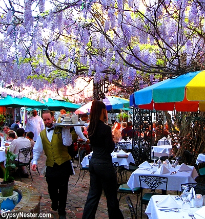 Wisteria in full bloom at The Court of Two Sisters restaurant in New Orleans, Louisiana