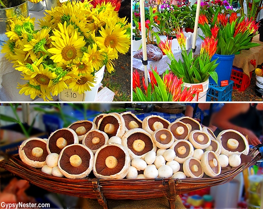 Riots of flowers and plants at the Sunday Noosa Farmers Market in Queensland, Australia