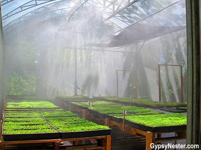 The greenhouse at Parador Resort and Spa, Manuel Antonio, Costa Rica