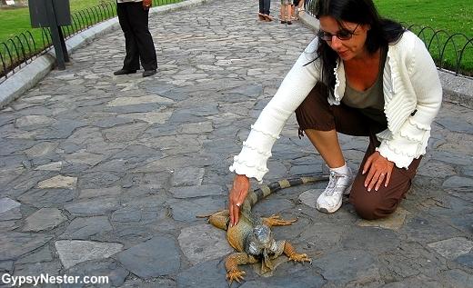 Veronica FINALLY gets to pet an iguana!