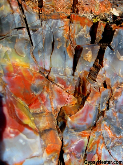 Petrified wood, up close in The Petrified Forest National Park of Arizona