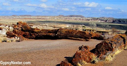 Huge logs in The Petrified Forest National Park in Arizona