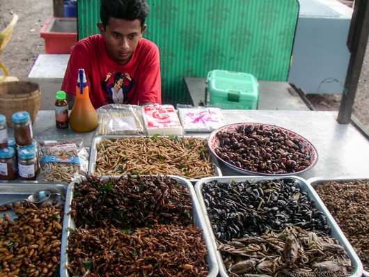 Insect Buffet by The Barefoot Nomad