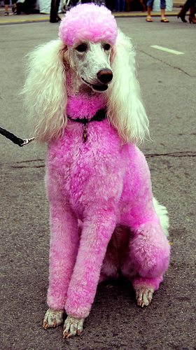 Pink Poodle by Irina Trips That Work