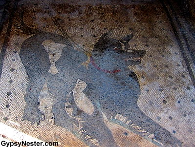Cave Canem or Beware of the Dog in Pompeii, Italy