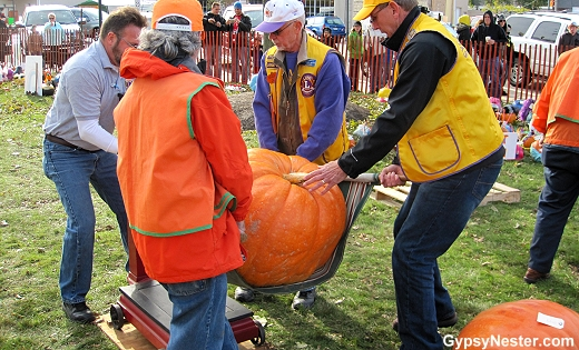 It takes four men to hoist the giant pumpkins onto the scale at the Sycamore Pumpkin Festival in Illinois!