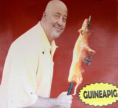 Guinea Pig on a Stick