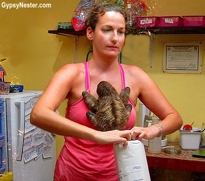 A baby sloth finds a new mommy at Kids Saving the Rainforest in Costa Rica