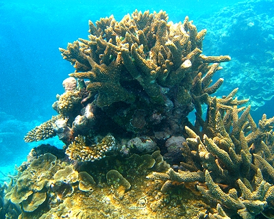 Coral formations at Lady Elliot Island in Queensland, Australia