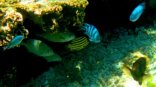 Fish pow wow on the Great Barrier Reef, Queensland, Australia