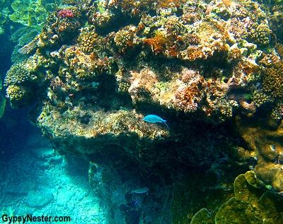 The coral garden at Lady Elliot Island, Queensland, Australia