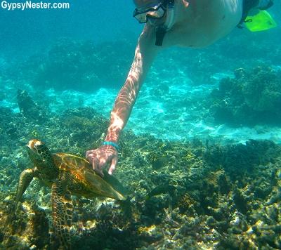 David snorkels with a sea turtle on Lady Elliot Island, Queensland, Australia, GypsyNester.com
