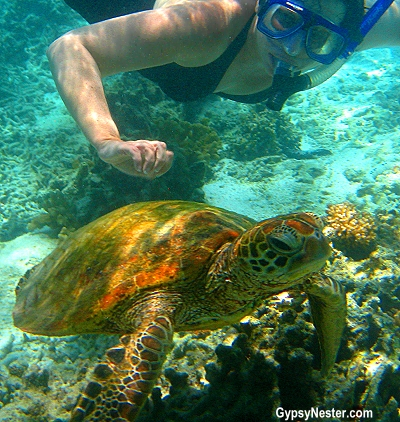 Veronica snorkels with a sea turtle on Lady Elliot Island, Queensland, Australia, GypsyNester.com