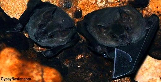 Bats hanging around Rio Secreto near Cancun, Mexico