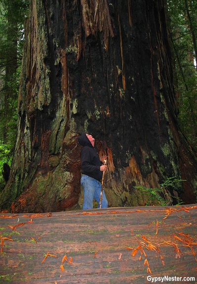 Hiking through the Redwood Forest in California! GypsyNester.com