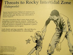 Click for more Zany Park Signs!