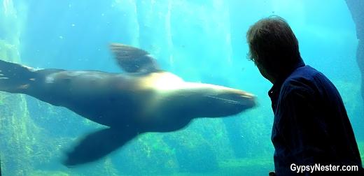 A seal in the SeaLife Center in Seward, Alaska