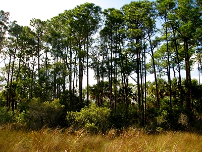 Hunting for Skunk Ape in the Everglades