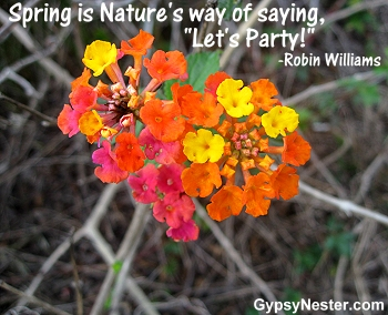 "Spring is Nature's way of saying, ""Let's Party!"" -Robin Williams"