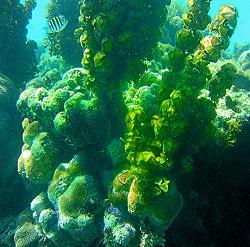 St. Croix under water scene