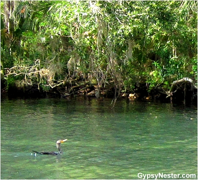 Homosassa River, Florida