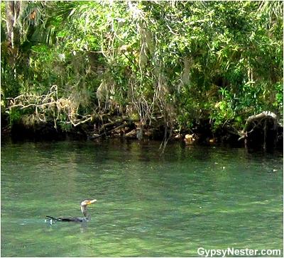 Homosassa River, Florida
