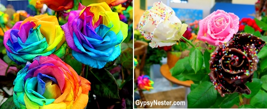 Experimental flowers (rainbow and chocolate roses) at Keukenhof Gardens in Lisse, Holland, The Netherlands