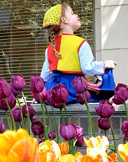 It's Tulip Time in Holland Michigan!