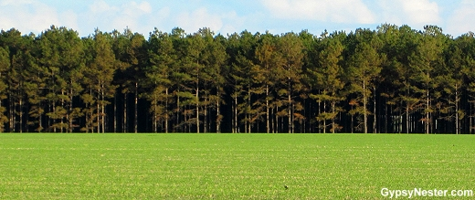 Vidalia Onion fields and Georgia Pines