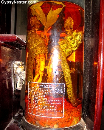 A snake and ginger root at the Tongtianhe Pharmacy in Zhujiajiao, China