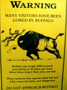 """Many visitors have been gored by buffalo"""