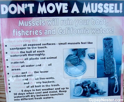 """Don't move a Mussel"""